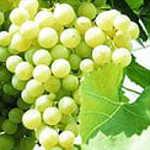 Польза виноградной диеты