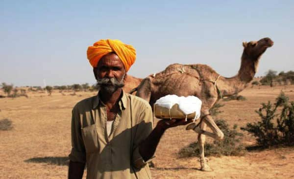 Верблюжье молоко - польза