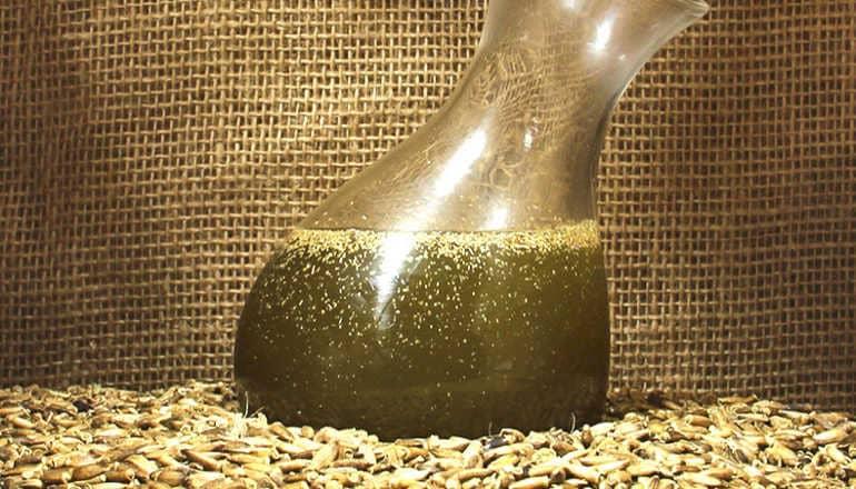 Как делать масло расторопши