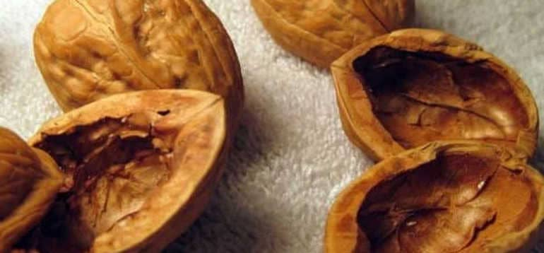 Скорлупа грецких орехов