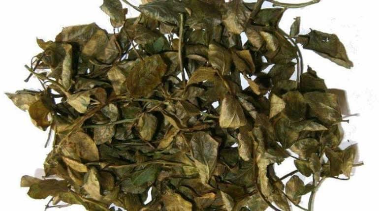 Сухие листья черники